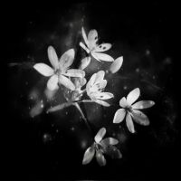 ..: Delicate - BW :.. by Mademoiselle-P