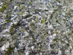 Moss On A Rock by salvadorsam