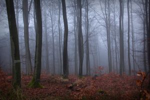 Foggy Forest 01 by sacral-stock