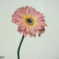 Pink Gerbera by Bethan-Powell