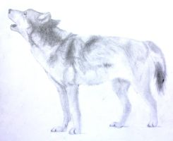 Wolf by Ateo88