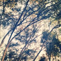 Bent Branches by shelbyrenee