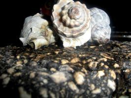 shells and roads by oldirtyruca