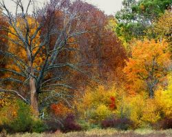 Shades of Autumn XIV by MadGardens