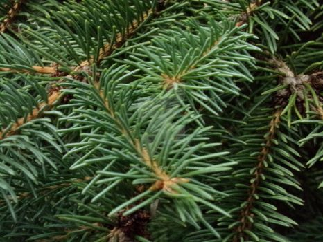 Pine Needles by Warfreaksis2