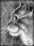 Some Cat Profile by philippeL
