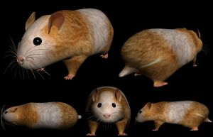 Hamster 3D by pedrozanin