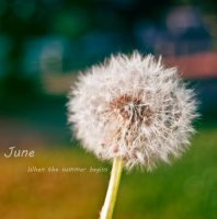June by Maarel