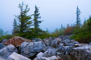 Dolly Sods Fog by LAlight