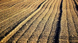 Ploughed Field Texture Stock by jojo22