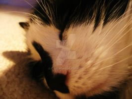 Kitty face by Oxis