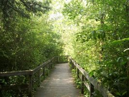 Nature trail by NZealo