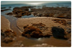beach- Tilt shift -04 by fifoux