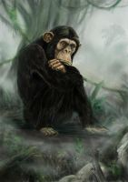 The last ape by Bisanti