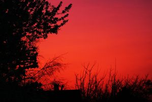 Sunset Silhouette. by jibbyjabba