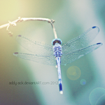 Dragonfly II by addy-ack