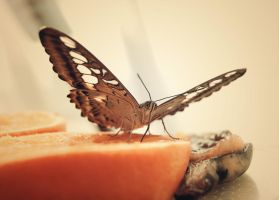 Butterfly eating an orange by SteffiSTEREO