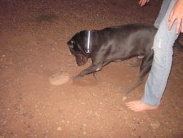 Dog Digging 2 by Spinian
