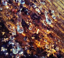 Frozen Trunk Dew 2 by Humble-Novice