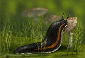 Hissing slug by AlexSone