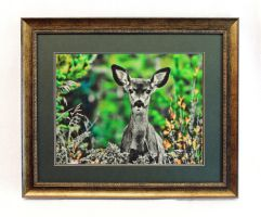 Curious Fawn Framed Print by Joe-Lynn-Design