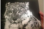 Scratchboard: Snow Leopard by PeachBerryDivision