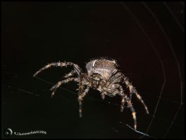 Charlottes Web by KJSummerfield