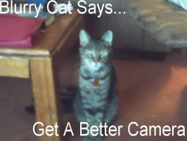 Third lolcat by lady-warrior