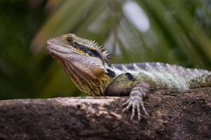 Eastern Water Dragon by HeyNay