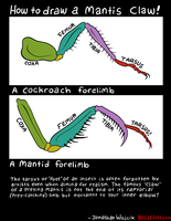 Mantis arm drawing guide by scythemantis