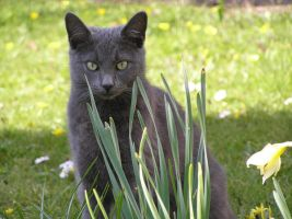 Sage Among The Daffodils 6 by thetamar