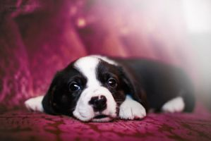 Puppy Heaven, Yes Please! by HiawathaPhoto