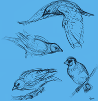 Bird Study by harrie5