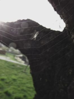 Web. by AllieSbabbs