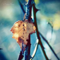 Autumn memory by MathildeHPhotography