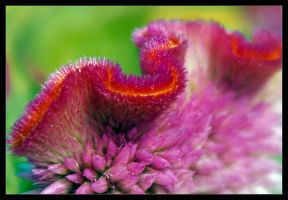 Macro Flower III by joelht74