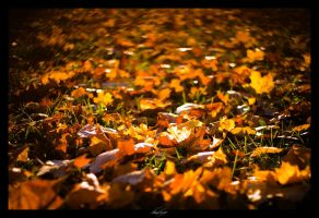 just autumn 2 by Lost-Wave