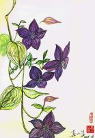 Clematis by RebexTrip
