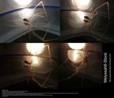 Spider and Mirror Stock 3 by Melyssah6-Stock