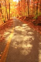 The Road Less Traveled By (Autumn) IV by SparkVillage