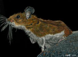 Darryl the Deer Mouse by TheNeenster