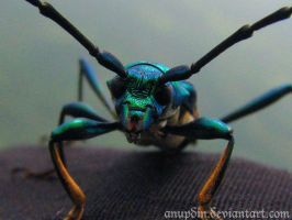 Tigerbeetle by AnuPdin