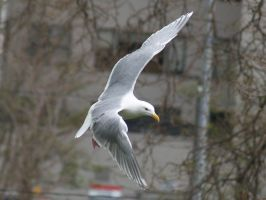 Seagull 2 by TheInfernalDemon