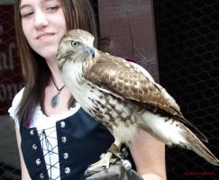 Cindy displaying Ollie The Red Tailed Hawk by SD-of-Chaos-Society