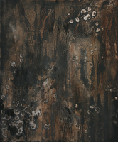 I trace trees onto savaged walls by dreamingshadow