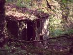 The Old Potting Shed by crowthius