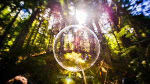 Forest Bubble by OEMminus