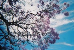 Blossoms again by alazada9855