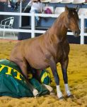 STOCK - 2014 Total Equine Expo-121 by fillyrox