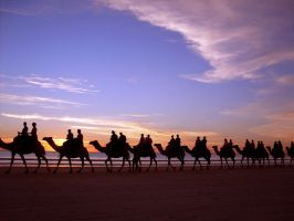Camels On Cable Beach by Thrill-Seeker